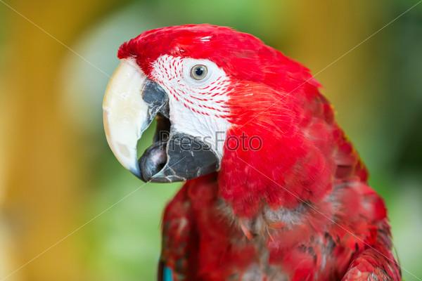 Фотография на тему Попугай ара