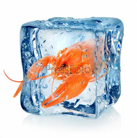 Фотография на тему Рак в кубике льда