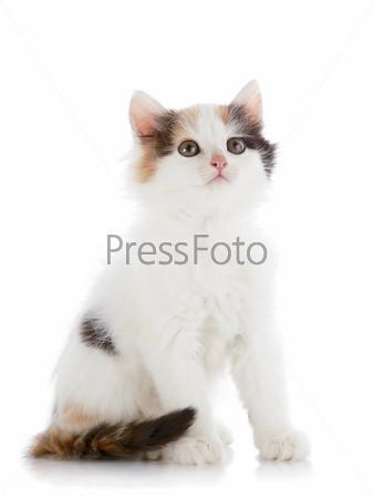 Маленький белый котенок с цветными пятнами