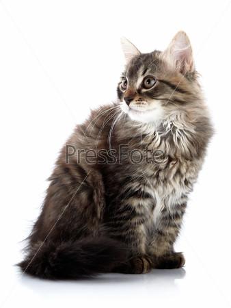 Фотография на тему Полосатый пушистый котенок сидит