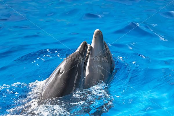 Дельфины в аквапарке