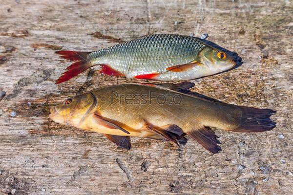 Сырая рыба карась и карп на деревянном фоне