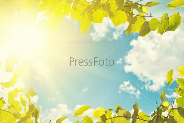 Фотография на тему Листья, голубое небо и солнце