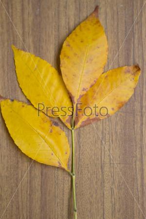 Осенние листья на доске