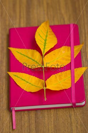 Желтые листья на блокноте
