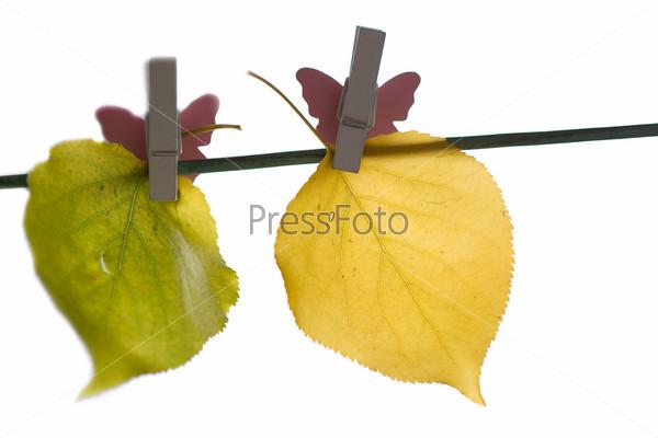 Различные осенние листья на веревке