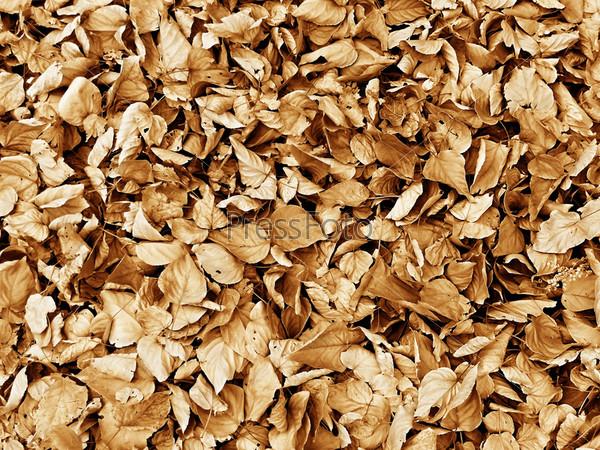 Осенний фон из опавших листьев