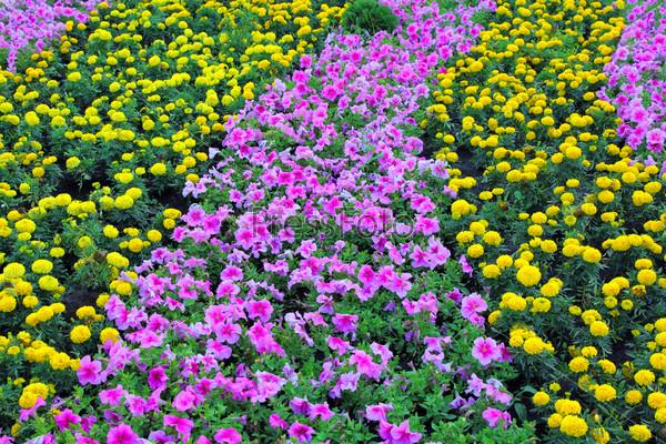 Летний пейзаж с желтыми цветами