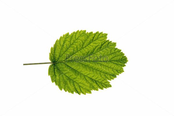 Осенний лист на белом фоне