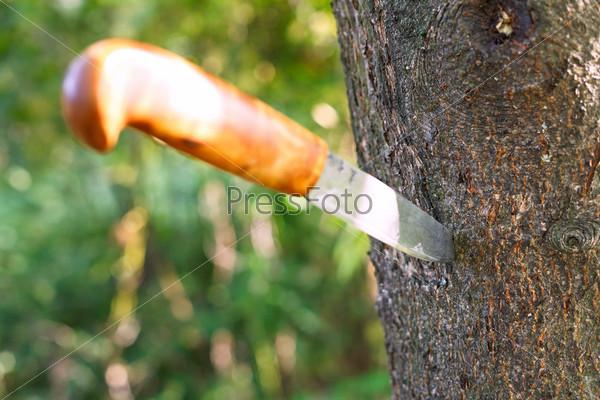 Фотография на тему Нож застрял в дереве