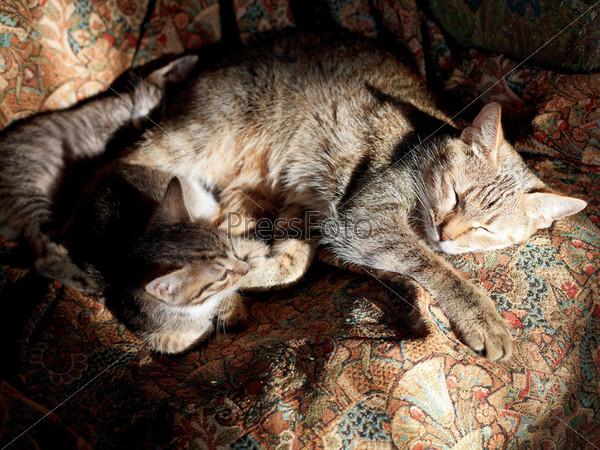 Спящая кошка с котятами