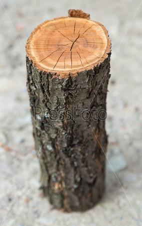 Круглое полено, текстура древесины