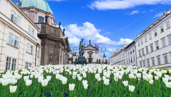 Фотография на тему Тюльпаны и здания