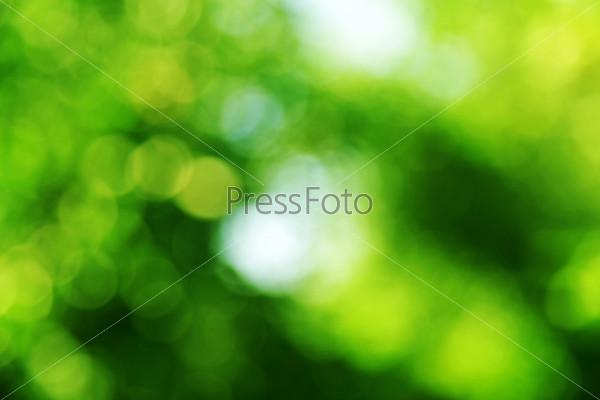 Зеленый фон. Боке
