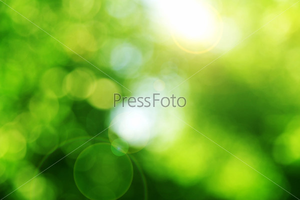 Фотография на тему Зеленый фон. Боке
