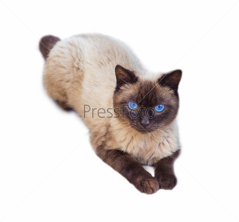 Фотография на тему Кошка