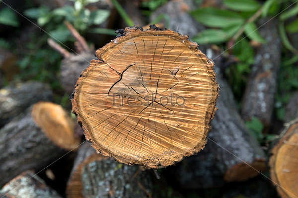 Фотография на тему Текстура древесины