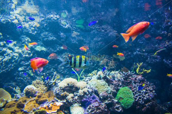 Фотография на тему Тропические рыбы под водой