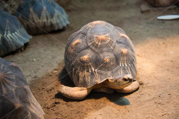 Медленно ползущая черепаха