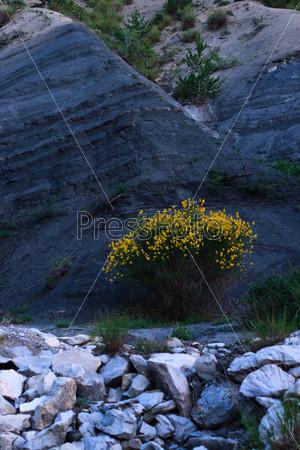 Желтый куст на холме ночью