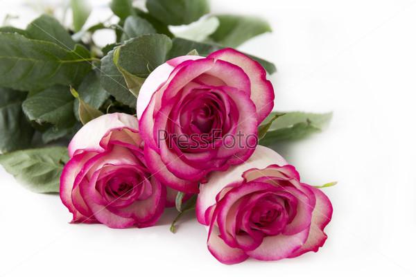 Букет красно-белых роз крупным планом
