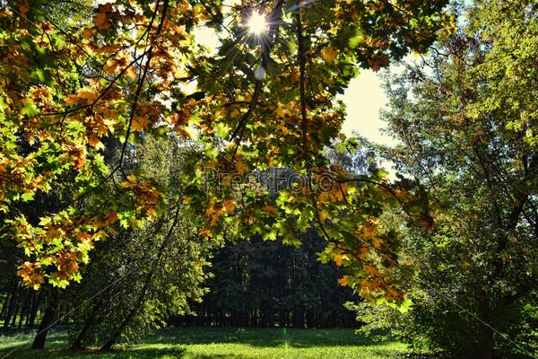Лучи солнца сквозь листья