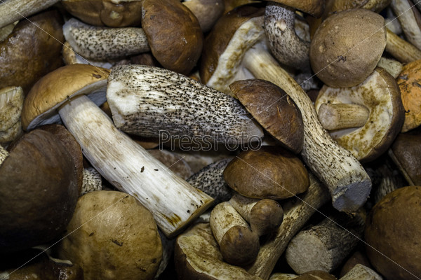 Много грибов разных размеров