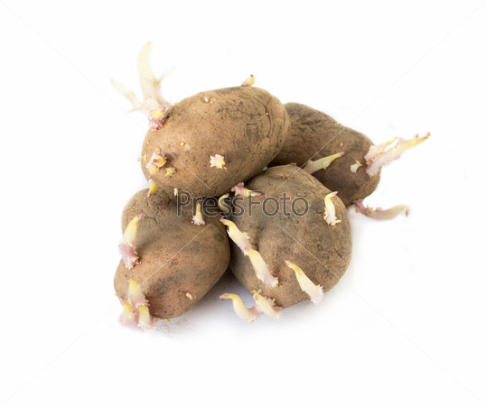 Фотография на тему Картофельные клубни с ростками для посадки