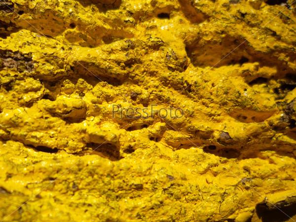 Фотография на тему Желтая кора ореха
