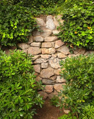 Плющ и старая стена