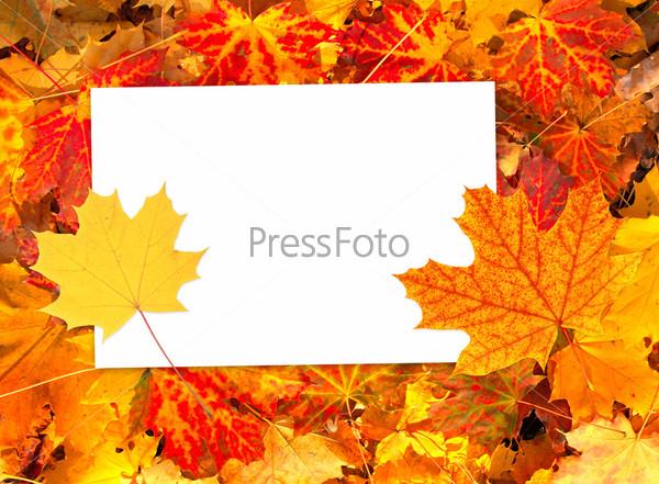 Фотография на тему Фон с осенними листьями и бумагой