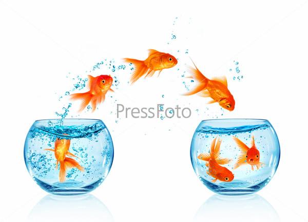 Золотая рыбка прыгает