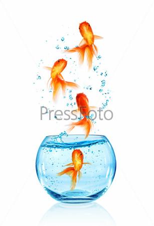 Фотография на тему Золотая рыбка прыгает