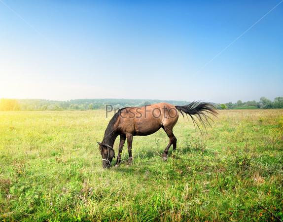 Фотография на тему Лошадь на лугу