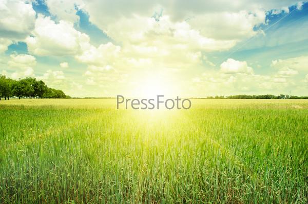 Красивый закат над весенним полем