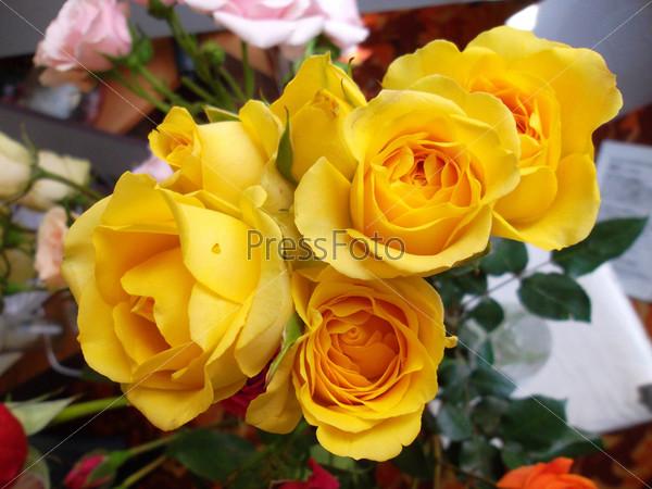 Фотография на тему Розы на рабочем столе