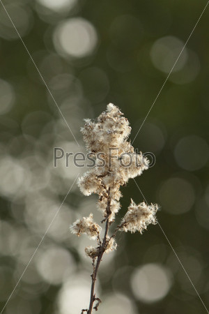 Сухой цветок крупным планом