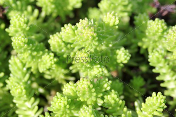 Фотография на тему Растения на альпийской горке