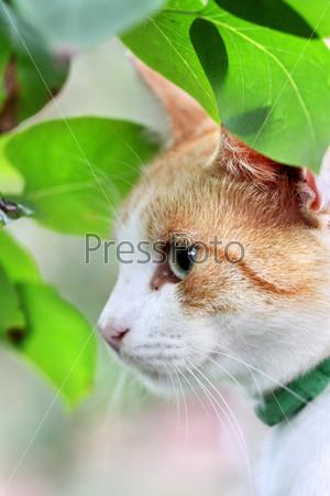 Красивый бело-рыжий кот в зеленых листьях