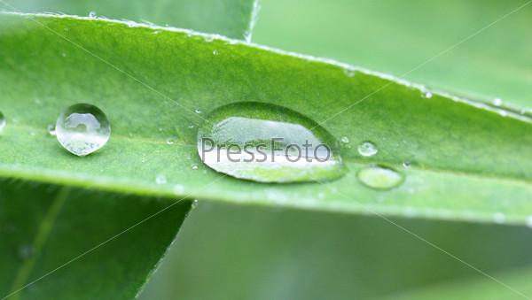 Овальная прозрачная капля воды на зеленом листе