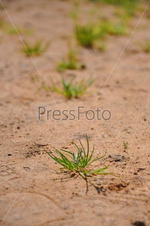 Піські крупним планом фото