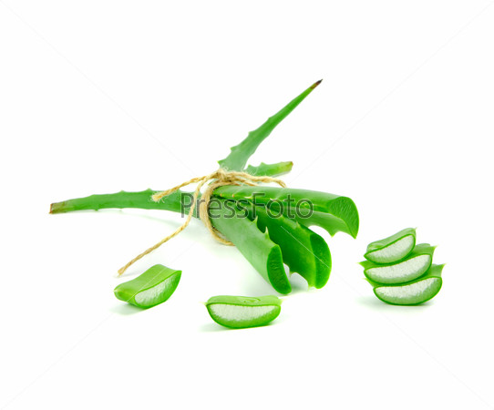 leafs of Aloe vera