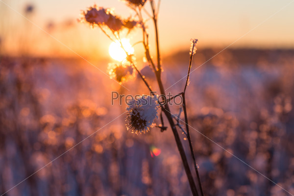 Frosty grass at winter sunset