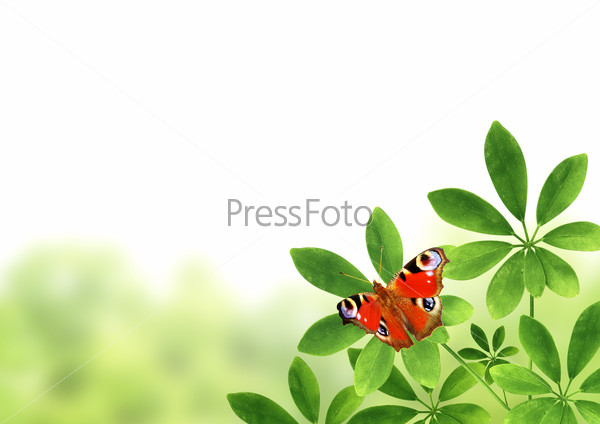 Green leaves and butterfly