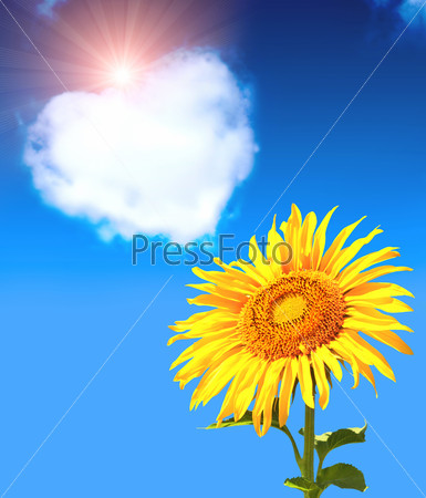 Heart from clouds and sunflower
