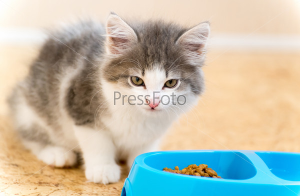 Fiv multi cat household