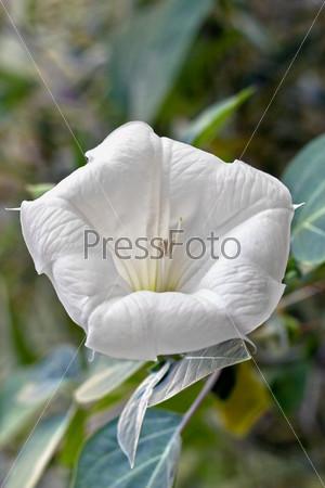 White flower.
