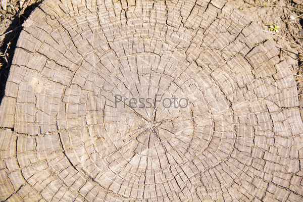 Brown texture stem tree