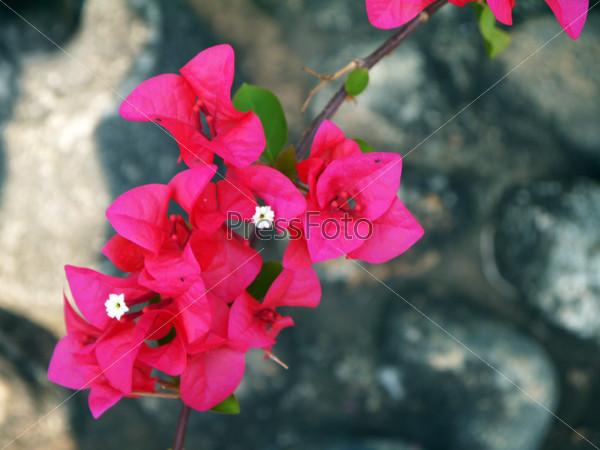 Тропический красный цветок
