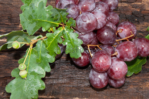 Bunch of grapes and oak leaf